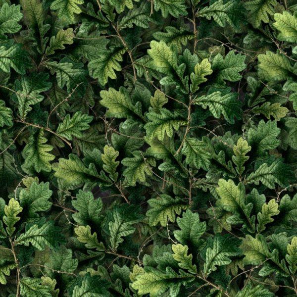 English-Oak-thumb