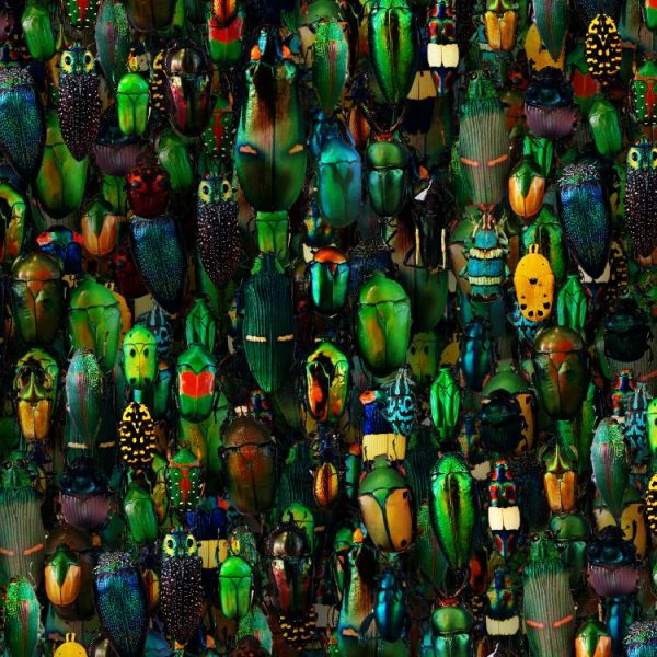 Iridescent-Beetles-22-thumb