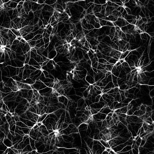 Neurons-22-thumb