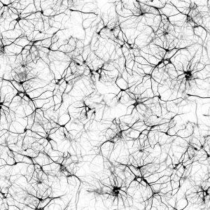 Neurons-23-thumb