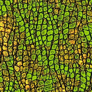 Reptile-Skin-25-thumb