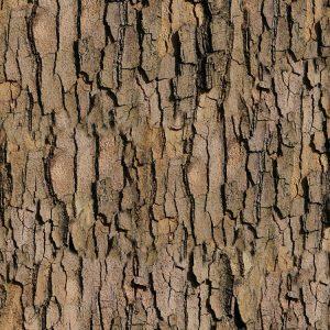 True Bark 25 thumb
