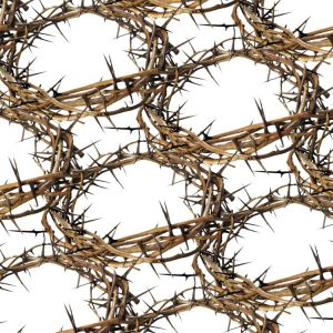 Crown-of-Thorns-22-thumb
