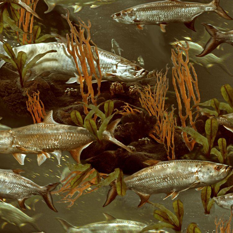 Fishoflage