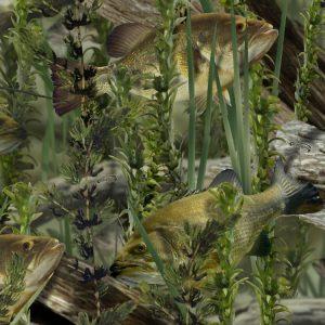 Fishoflage Bass Camouflage