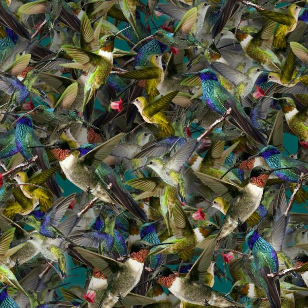 Hummingbirds-22-thumb