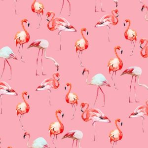 Flamingos-23-thumb