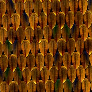 African Bush Viper Scales