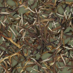 Antlers 23 Olive thumb 1