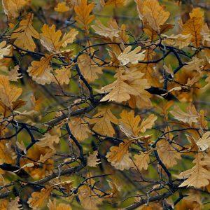 Fall-Foliage-Camo-thumb