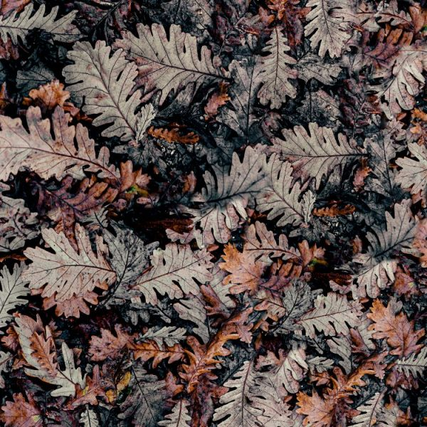 Fall Leaf Camouflage 24