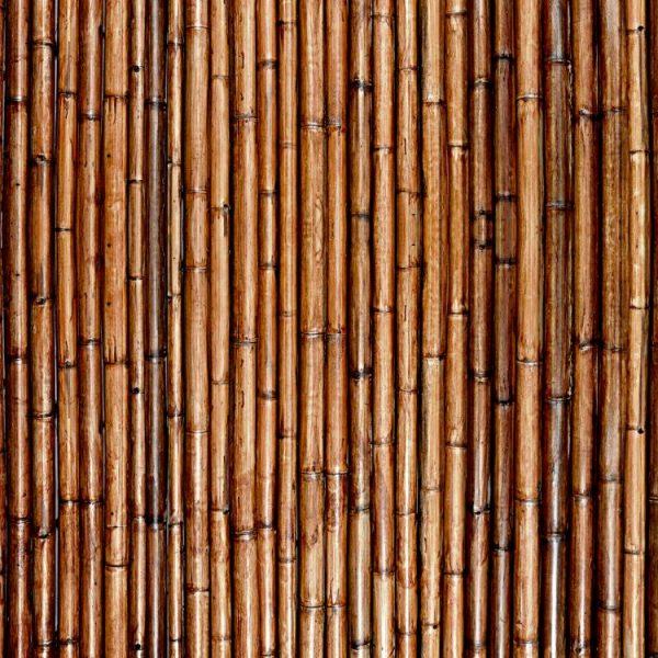 Varnished Bamboo