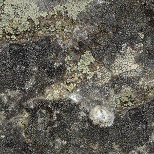 Lichen 22 Camo thumb