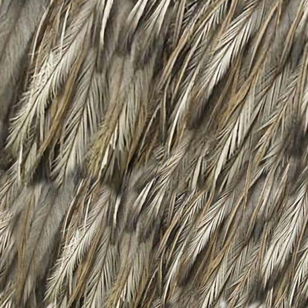 Emu Feathers thumb