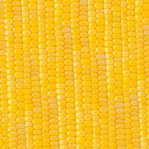Sweet Corn 22