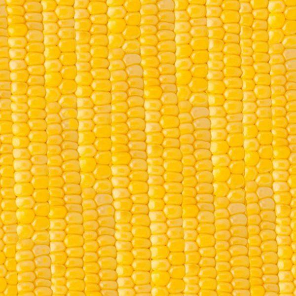 Sweet Corn 22 thumb