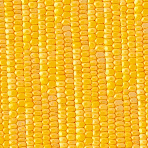 Sweet Corn 23 thumb 1