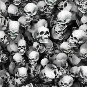 3D Skull Study