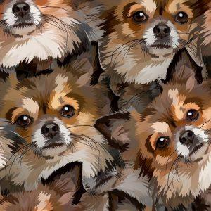 Chihuahuas 22