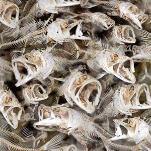Fish Frenzy HexCamo 23